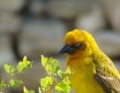 birdy_small