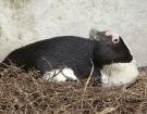 penguin-solo1