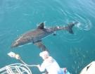 sharks02